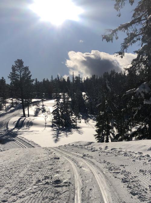 Svanstul i Skien